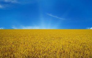 http://www.grainalliance.com/ua/wp-content/uploads/%D0%BF%D1%80%D0%B0%D0%BF%D0%BE%D1%80-%D0%BF%D0%BE%D0%BB%D0%B5-300x188.jpg